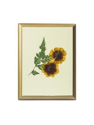 Картина - сувенир Гербарий Солнечный цветок DEEPOT. Цвет: светло-бежевый