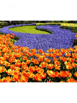Раскраски по номерам Клумба с тюльпанами и ирисами Цветной. Цвет: белый