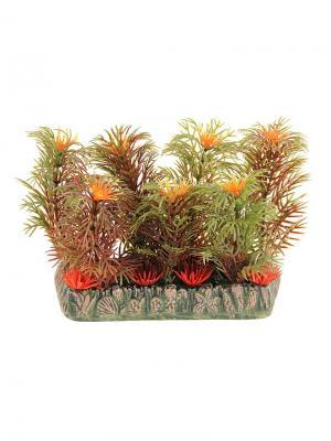Растение для аквариума 10см. LAGUNA. Цвет: зеленый, оранжевый