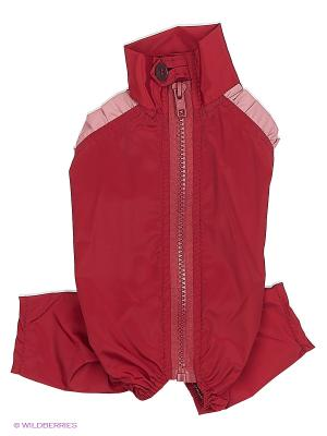 Дождевик холодный (Той-терьер), девочка ТУЗИК. Цвет: бордовый