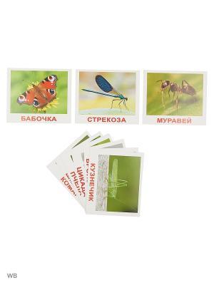 Набор обучающих карточек Насекомые Вундеркинд с пеленок. Цвет: зеленый
