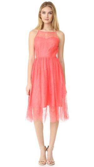Кружевное миди-платье Strady cupcakes and cashmere. Цвет: сорбет