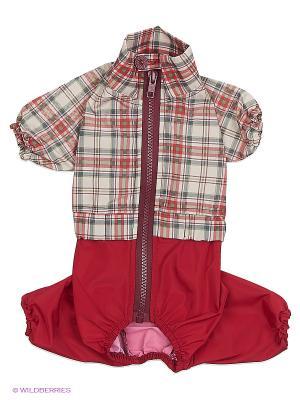 Дождевик холодный (Йоркширский терьер №1), мальчик ТУЗИК. Цвет: малиновый