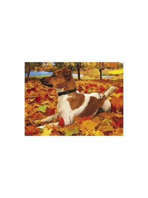 Пазл 500 элементов  -Милый щенок- Издательство Хатбер-пресс. Цвет: оранжевый