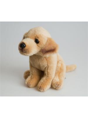 Собака Бой Fancy. Цвет: коричневый