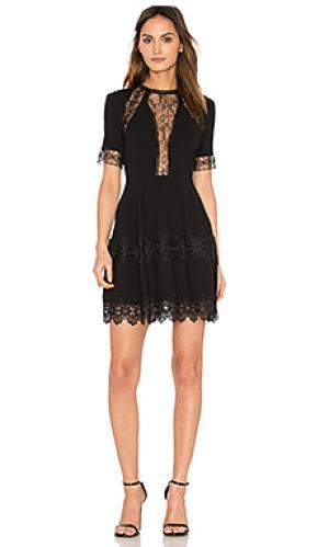 Мини платье с кружевной вставкой NICHOLAS. Цвет: черный