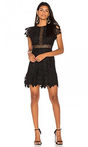 Платье calvin BB Dakota. Цвет: черный