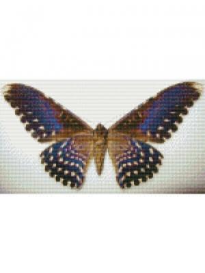 Алмазная мозаика Бабочка Совка агриппина Цветной. Цвет: белый
