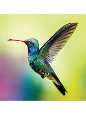 Art Холст Колибри  25х25 см DECORETTO. Цвет: голубой, фиолетовый, желтый