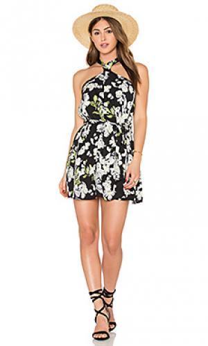 Платье sophie Lucca Couture. Цвет: черный