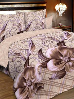 Комплект постельного белья, евро, бязь, пододеяльник на молнии Letto. Цвет: бежевый, коричневый