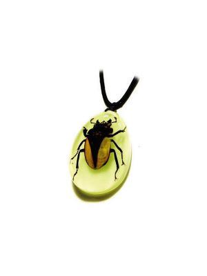 В Мире Насекомых Горный Жук Олень Кулон XL Склад Уникальных Товаров. Цвет: коричневый, прозрачный