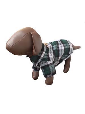 Рубашка Pet's Fashion. Цвет: зеленый