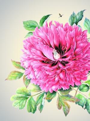 Наволочка Цветы 2 Матренин Посад. Цвет: розовый, зеленый