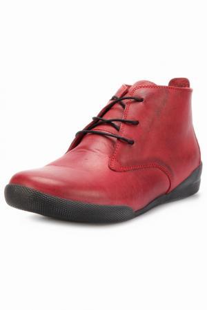 Ботинки Andrea Conti. Цвет: vinous