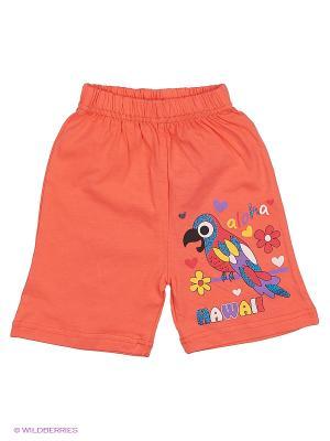 Шорты Bonito kids. Цвет: коралловый, оранжевый