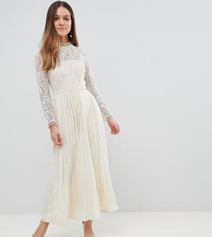Little Mistress Petite Платье макси с кружевным верхом и плиссированной юбкой. Цвет: кремовый