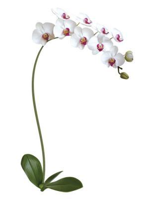 Виниловая наклейка Белая орхидея DECORETTO. Цвет: белый, зеленый, розовый, желтый