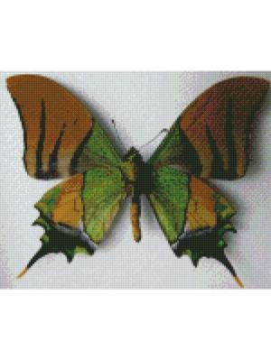 Алмазная мозаика Индийская бабочка Цветной. Цвет: белый