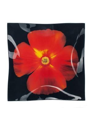 Тарелка 25 см Elff Ceramics. Цвет: черный, красный
