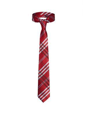 Стильный галстук Свежий ветер из Глазго в шотландскую клетку Signature A.P.. Цвет: красный, белый, бордовый