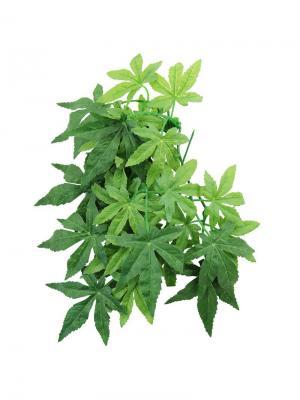 Растение Абутилон 400мм. REPTI-ZOO. Цвет: зеленый