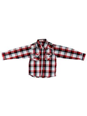 Рубашка DAMY-M. Цвет: красный