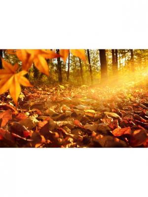 Картина Желтые листья Ecoramka. Цвет: бордовый, рыжий, светло-коричневый