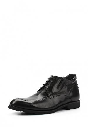 Ботинки классические Marco Lippi. Цвет: черный
