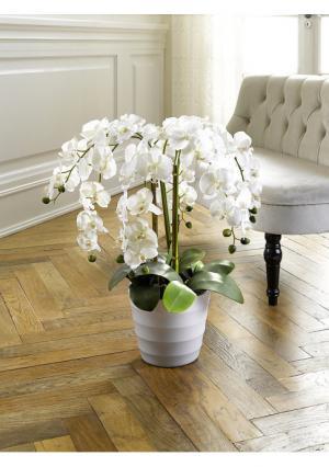 Искусственная орхидея Heine Home. Цвет: белый
