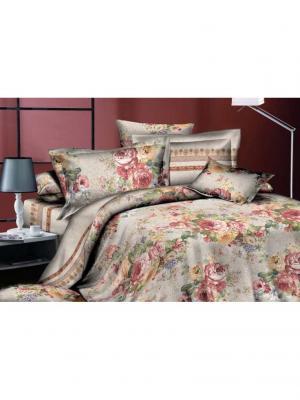 Комплект постельного белья 2сп, поплин BegAl. Цвет: светло-коричневый