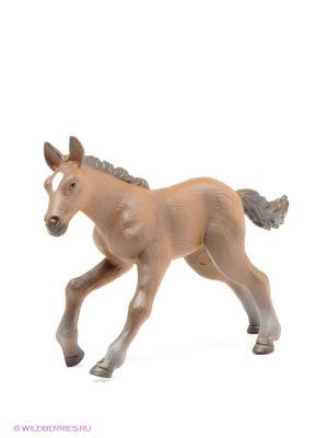 Ганноверский жеребенок MOJO. Цвет: коричневый