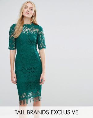 Paper Dolls Tall Кружевное платье с контрастной подкладкой и кисточками по краю D. Цвет: зеленый