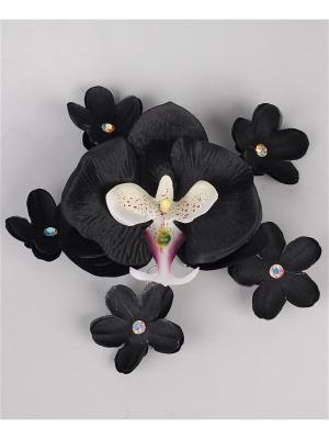 Орхидея Jane Flo. Цвет: черный