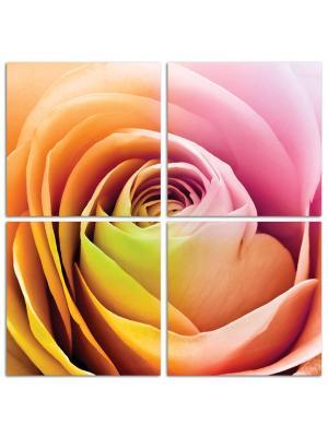 Роза чайная DECORETTO. Цвет: розовый, желтый, сиреневый