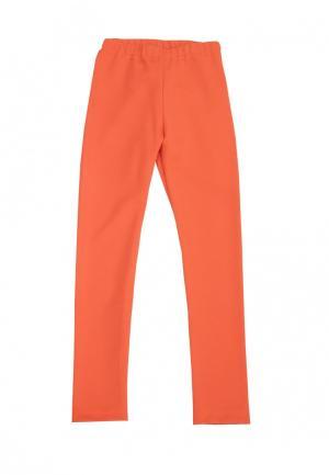 Леггинсы AnyKids. Цвет: оранжевый