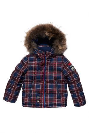 Куртка Junior Republic. Цвет: клетка, синий