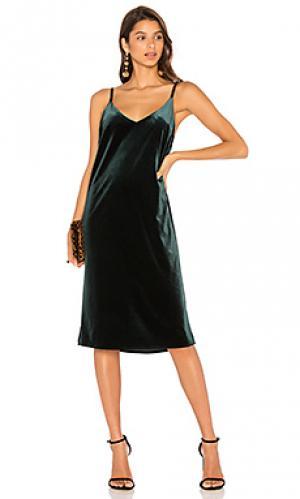 Платье sydney Sanctuary. Цвет: зеленый