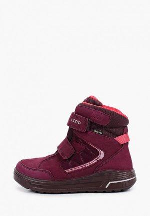 Ботинки Ecco URBAN SNOWBOARDER. Цвет: фиолетовый